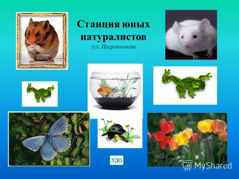 Станция юных натуралистов (ул. Пограничная) УДО