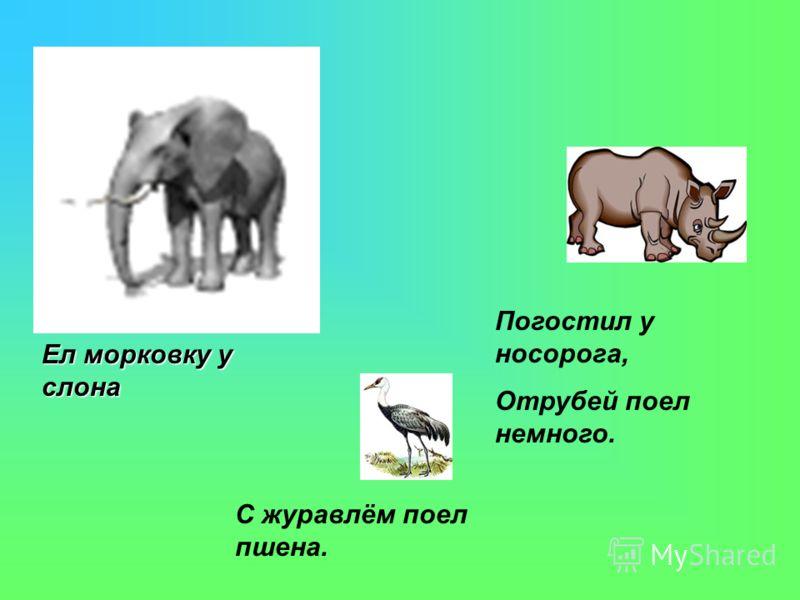 Ел морковку у слона С журавлём поел пшена. Погостил у носорога, Отрубей поел немного.