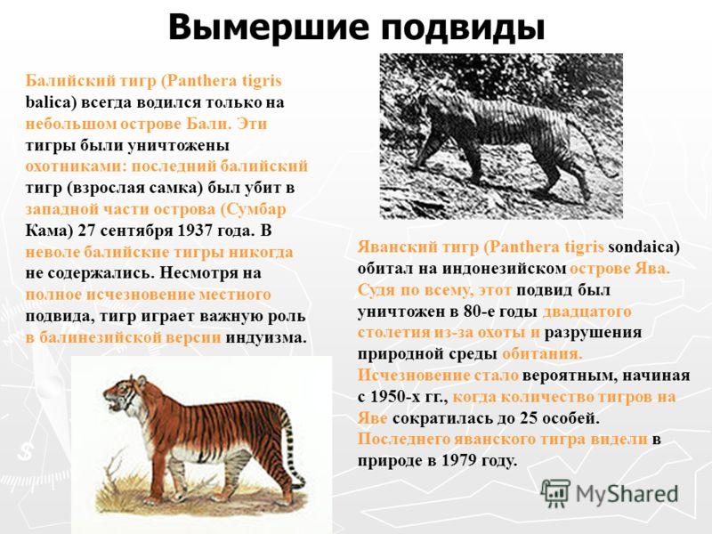 Вымершие подвиды Балийский тигр (Panthera tigris balica) всегда водился только на небольшом острове Бали. Эти тигры были уничтожены охотниками: последний балийский тигр (взрослая самка) был убит в западной части острова (Сумбар Кама) 27 сентября 1937