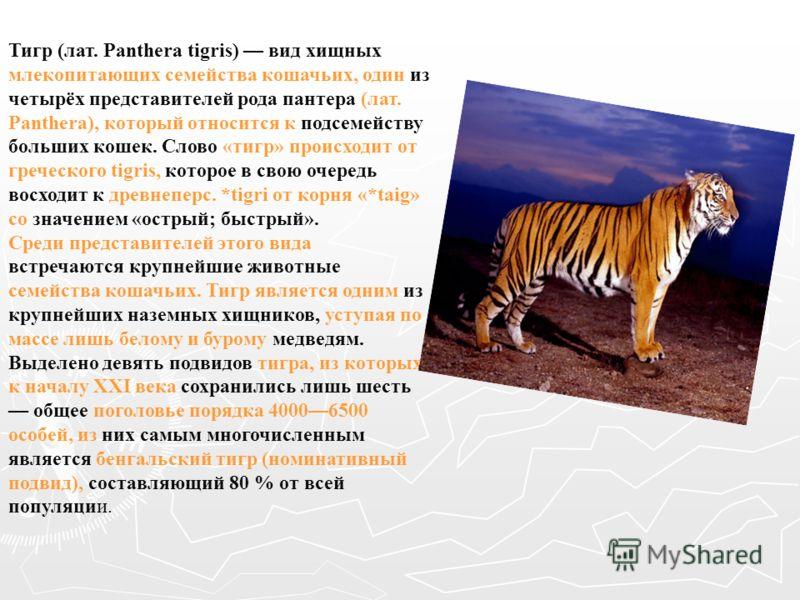 Тигр (лат. Panthera tigris) вид хищных млекопитающих семейства кошачьих, один из четырёх представителей рода пантера (лат. Panthera), который относится к подсемейству больших кошек. Слово «тигр» происходит от греческого tigris, которое в свою очередь