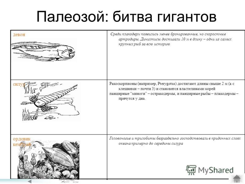 Палеозой: битва гигантов девон Среди плакодерм появились менее бронированные, но скоростные артродиры. Динихтисы достигали 10 м в длину – одни из самых крупных рыб за всю историю силур Ракоскорпионы (например, Pterygotus) достигают длины свыше 2 м (а