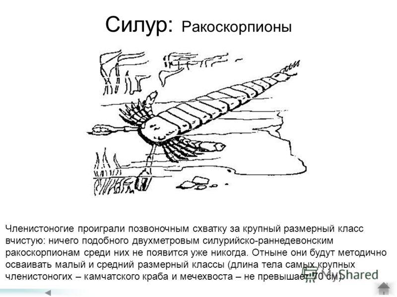 Силур: Ракоскорпионы Членистоногие проиграли позвоночным схватку за крупный размерный класс вчистую: ничего подобного двухметровым силурийско-раннедевонским ракоскорпионам среди них не появится уже никогда. Отныне они будут методично осваивать малый