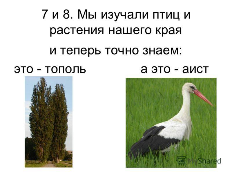 7 и 8. Мы изучали птиц и растения нашего края и теперь точно знаем: это - тополь а это - аист