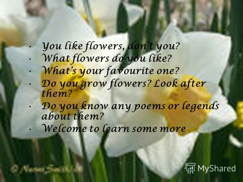 You like flowers, dont you? What flowers do you like? Whats your favourite one? Do you grow flowers? Look after them? Do you know any poems or legends about them? Welcome to learn some more