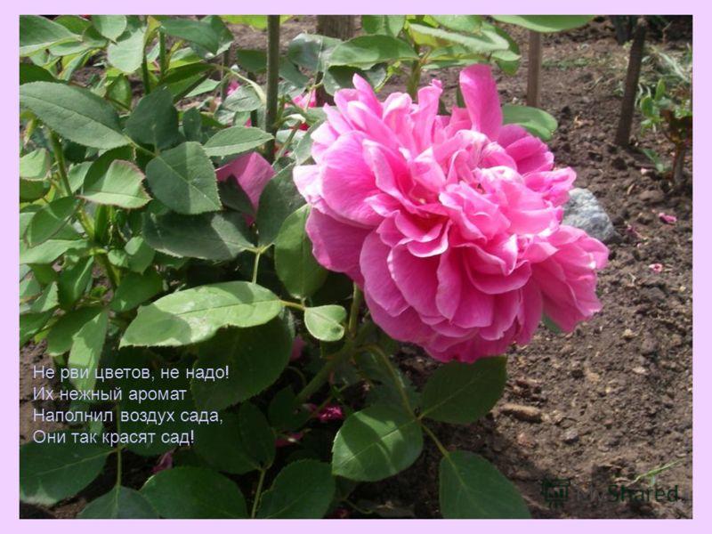 Не рви цветов, не надо! Их нежный аромат Наполнил воздух сада, Они так красят сад!