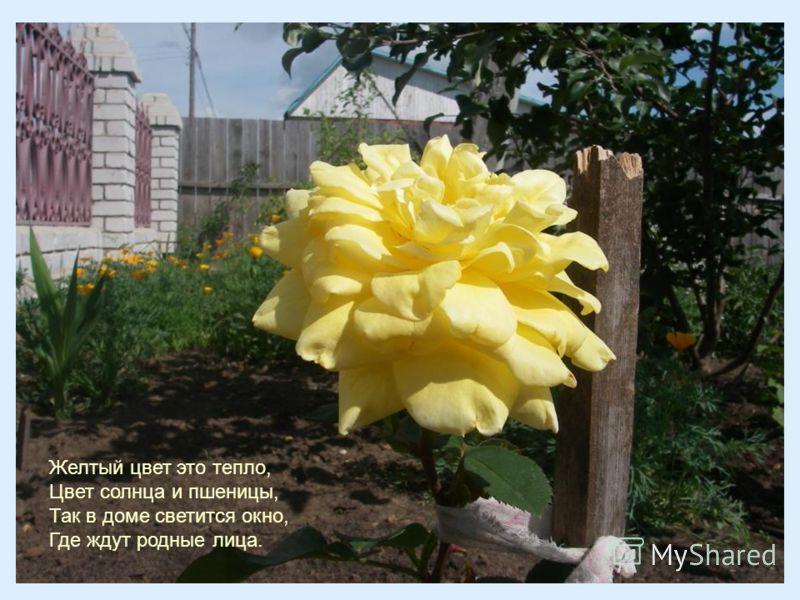 Желтый цвет это тепло, Цвет солнца и пшеницы, Так в доме светится окно, Где ждут родные лица.