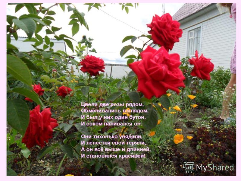 Цвели две розы рядом, Обменивались взглядом, И был у них один бутон, И соком наливался он. Они тихонько увядали, И лепестки свои теряли, А он всё выше и длинней, И становился красивей!