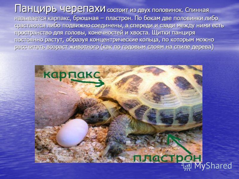 Цели и задачи проекта Изучить многообразие современных пресмыкающихся, отряда черепах; Изучить многообразие современных пресмыкающихся, отряда черепах; Показать черты приспособленности черепах к среде обитания; Показать черты приспособленности черепа