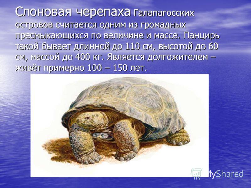 Панцирь черепахи состоит из двух половинок. Спинная называется карпакс, брюшная – пластрон. По бокам две половинки либо срастаются либо подвижно соединены, а спереди и сзади между ними есть пространство для головы, конечностей и хвоста. Щитки панциря