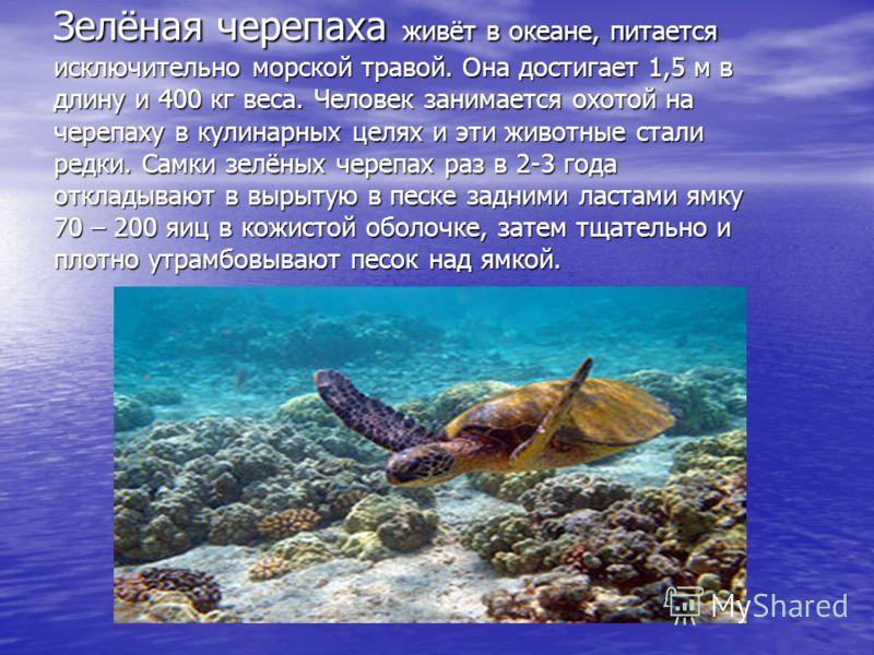 Слоновая черепаха Галапагосских островов считается одним из громадных пресмыкающихся по величине и массе. Панцирь такой бывает длинной до 110 см, высотой до 60 см, массой до 400 кг. Является долгожителем – живёт примерно 100 – 150 лет.