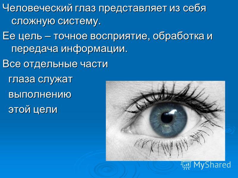 Человеческий глаз представляет из себя сложную систему. Ее цель – точное восприятие, обработка и передача информации. Все отдельные части глаза служат глаза служат выполнению выполнению этой цели этой цели