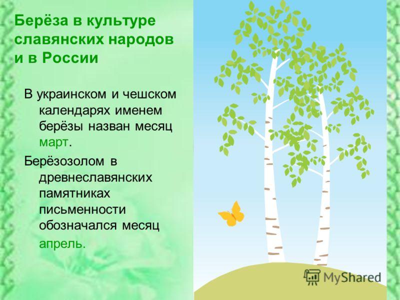 Берёза в культуре славянских народов и в России В украинском и чешском календарях именем берёзы назван месяц март. Берёзозолом в древнеславянских памятниках письменности обозначался месяц апрель.