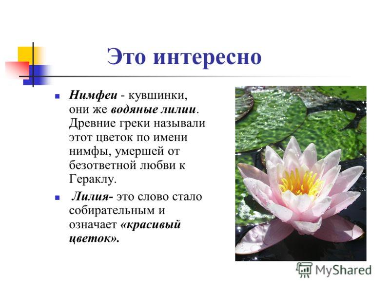 Это интересно Нимфеи - кувшинки, они же водяные лилии. Древние греки называли этот цветок по имени нимфы, умершей от безответной любви к Гераклу. Лилия- это слово стало собирательным и означает «красивый цветок».