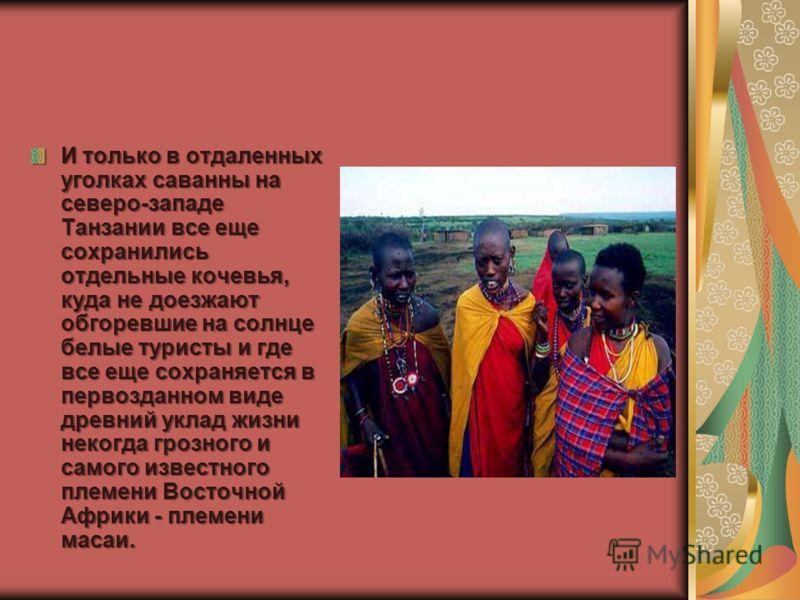И только в отдаленных уголках саванны на северо-западе Танзании все еще сохранились отдельные кочевья, куда не доезжают обгоревшие на солнце белые туристы и где все еще сохраняется в первозданном виде древний уклад жизни некогда грозного и самого изв