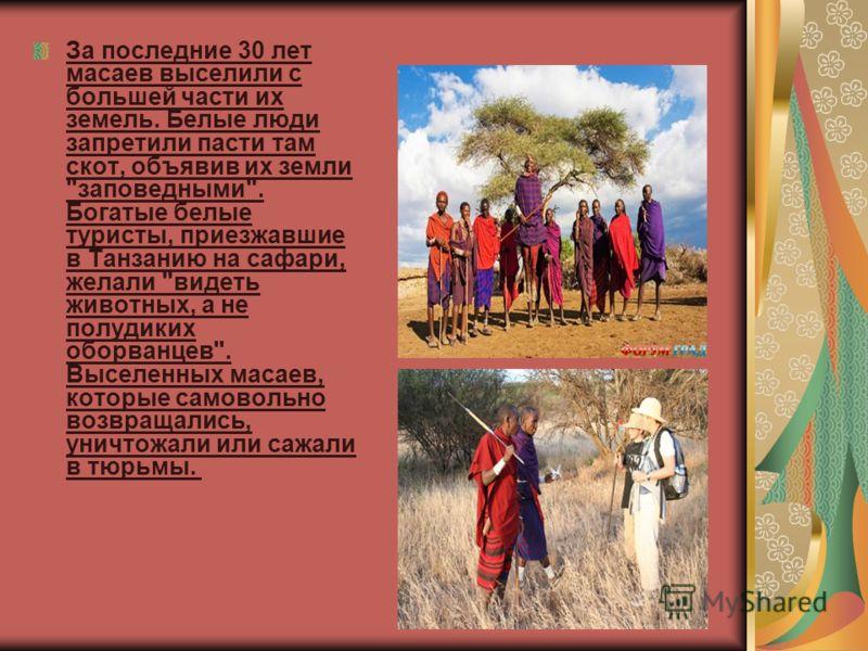 За последние 30 лет масаев выселили с большей части их земель. Белые люди запретили пасти там скот, объявив их земли