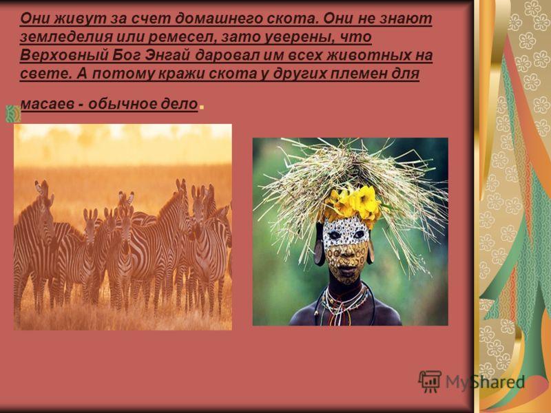 Они живут за счет домашнего скота. Они не знают земледелия или ремесел, зато уверены, что Верховный Бог Энгай даровал им всех животных на свете. А потому кражи скота у других племен для масаев - обычное дело.
