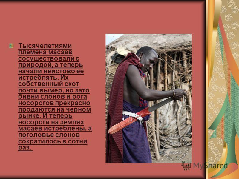 Тысячелетиями племена масаев сосуществовали с природой, а теперь начали неистово ее истреблять. Их собственный скот почти вымер, но зато бивни слонов и рога носорогов прекрасно продаются на черном рынке. И теперь носороги на землях масаев истреблены,