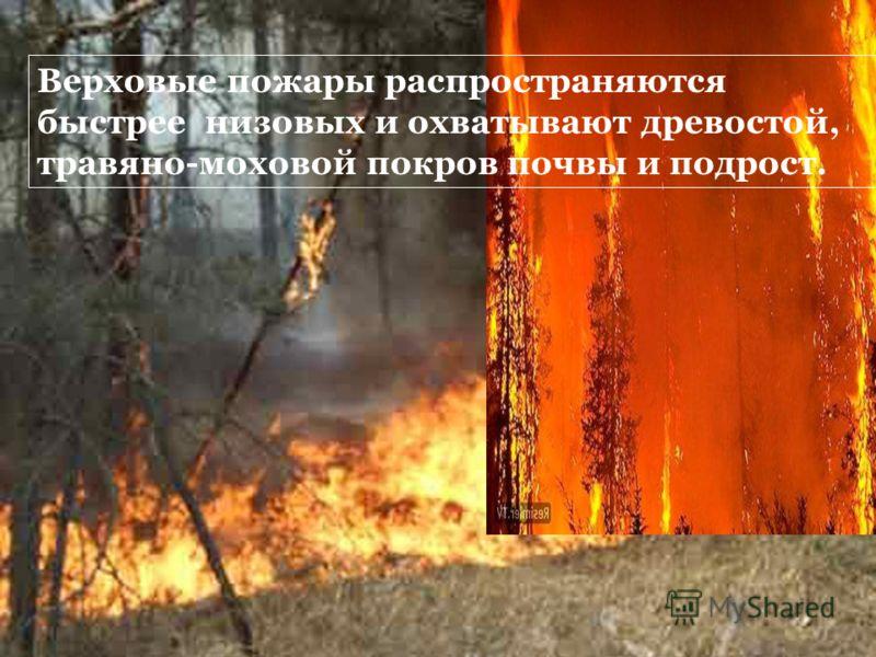 Верховые пожары распространяются быстрее низовых и охватывают древостой, травяно-моховой покров почвы и подрост.