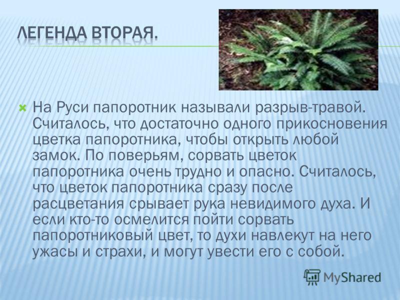 На Руси папоротник называли разрыв-травой. Считалось, что достаточно одного прикосновения цветка папоротника, чтобы открыть любой замок. По поверьям, сорвать цветок папоротника очень трудно и опасно. Считалось, что цветок папоротника сразу после расц