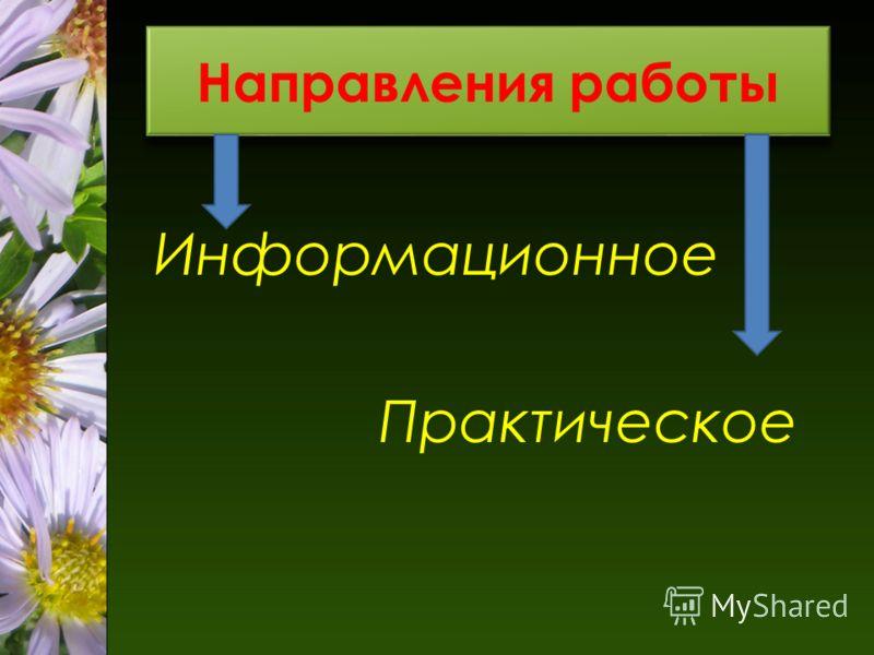 Направления работы Информационное Практическое