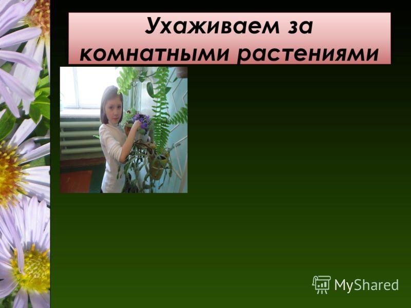 Ухаживаем за комнатными растениями