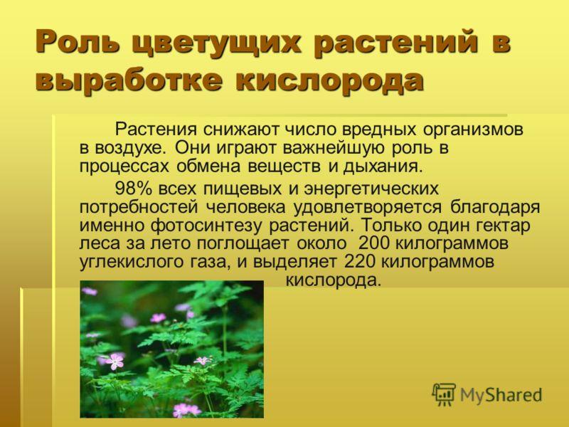 Роль цветущих растений в выработке кислорода Растения снижают число вредных организмов в воздухе. Они играют важнейшую роль в процессах обмена веществ и дыхания. 98% всех пищевых и энергетических потребностей человека удовлетворяется благодаря именно