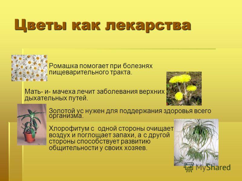 Цветы как лекарства Ромашка помогает при болезнях пищеварительного тракта. Мать- и- мачеха лечит заболевания верхних дыхательных путей. Золотой ус нужен для поддержания здоровья всего организма. Хлорофитум с одной стороны очищает воздух и поглощает з