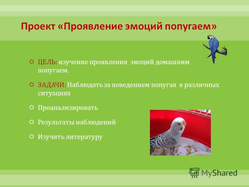 ЦЕЛЬ : изучение проявления эмоций домашним попугаем. ЗАДАЧИ : Наблюдать за поведением попугая в различных ситуациях Проанализировать Результаты наблюдений Изучить литературу