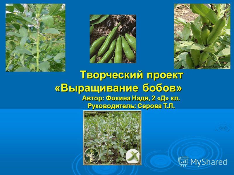 Творческий проект «Выращивание бобов» Автор: Фокина Надя, 2 «Д» кл. Руководитель: Серова Т.Л.
