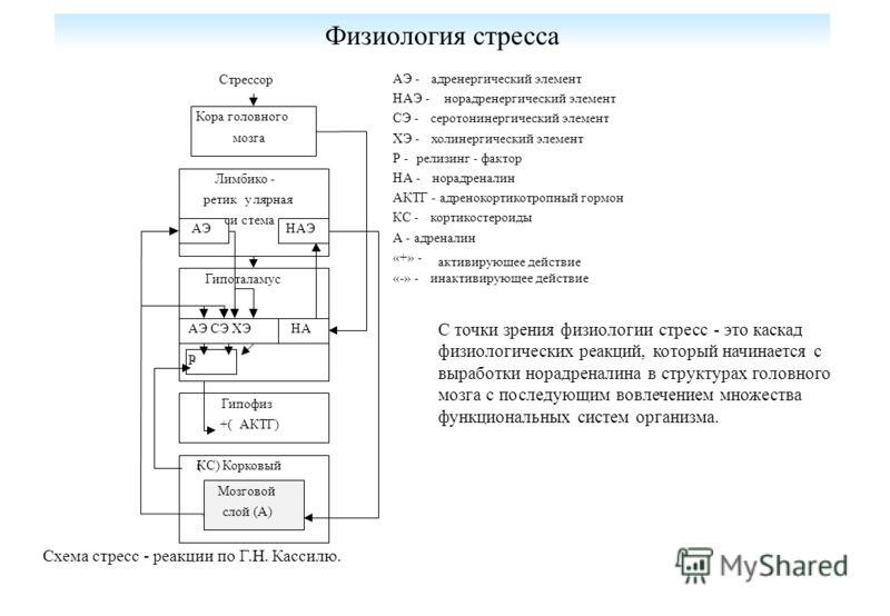 Физиология стресса Лимбико - ретикулярная система Кора головного мозга Стрессор Гипоталамус Гипофиз +( АКТГ) (КС) Корковый слой Мозговой слой (А) -Р АЭ СЭ ХЭНА АЭНАЭ АЭ -адренергический элемент НАЭ -норадренергический элемент СЭ -серотонинергический
