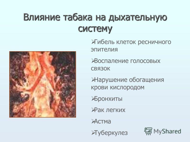 Влияние табака на дыхательную систему Гибель клеток ресничного эпителия Воспаление голосовых связок Нарушение обогащения крови кислородом Бронхиты Рак легких Астма Туберкулез
