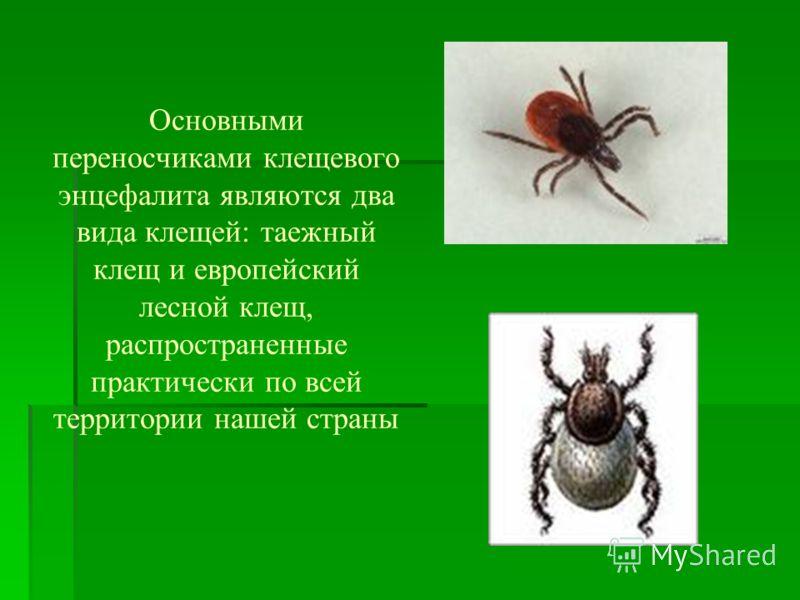 Основными переносчиками клещевого энцефалита являются два вида клещей: таежный клещ и европейский лесной клещ, распространенные практически по всей территории нашей страны