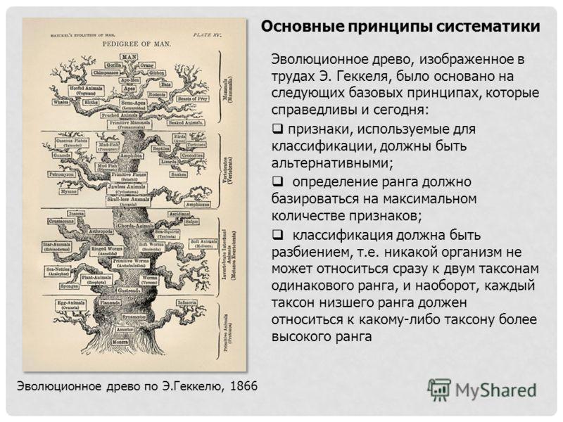 Основные принципы систематики Эволюционное древо по Э.Геккелю, 1866 Эволюционное древо, изображенное в трудах Э. Геккеля, было основано на следующих базовых принципах, которые справедливы и сегодня: признаки, используемые для классификации, должны бы