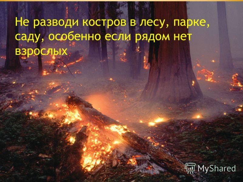 Не разводи костров в лесу, парке, саду, особенно если рядом нет взрослых