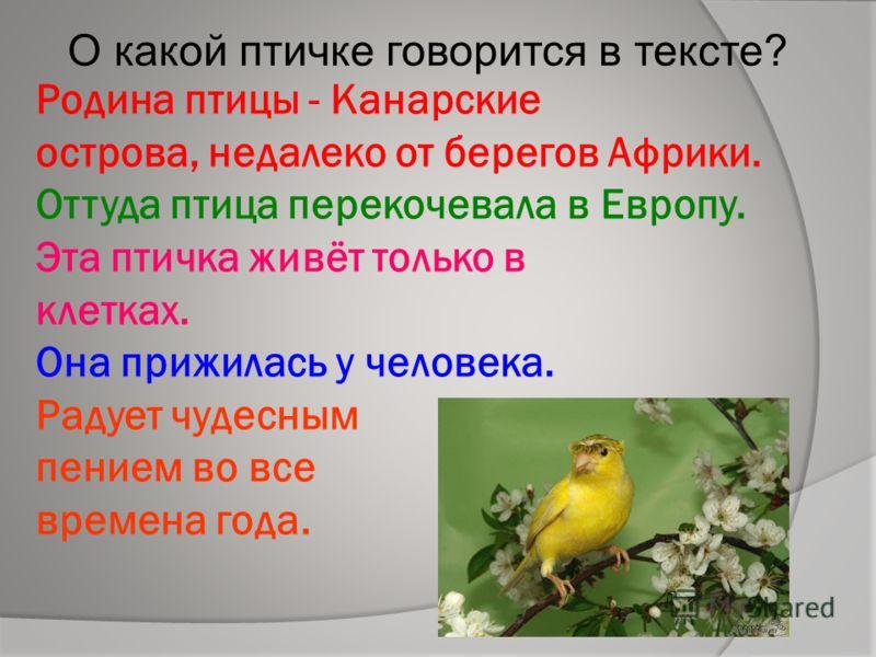 Родина птицы - Канарские острова, недалеко от берегов Африки. Оттуда птица перекочевала в Европу. Эта птичка живёт только в клетках. Она прижилась у человека. Радует чудесным пением во все времена года. О какой птичке говорится в тексте?