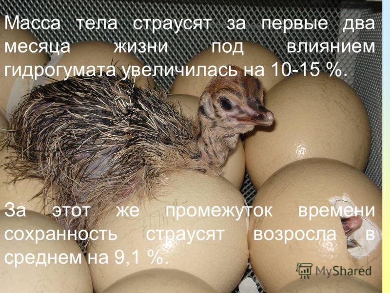 Масса тела страусят за первые два месяца жизни под влиянием гидрогумата увеличилась на 10-15 %. За этот же промежуток времени сохранность страусят возросла в среднем на 9,1 %.