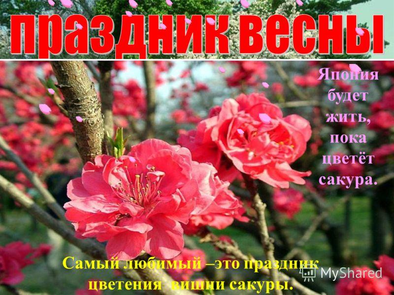 Самый любимый –это праздник цветения вишни сакуры. Япония будет жить, пока цветёт сакура.