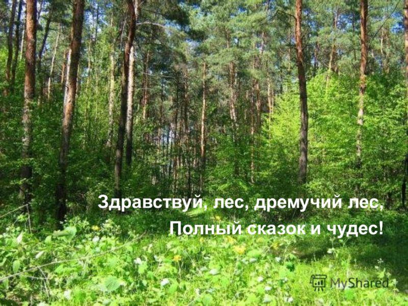 Здравствуй, лес, дремучий лес, Полный сказок и чудес!