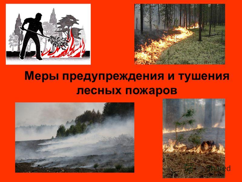 Меры предупреждения и тушения лесных пожаров