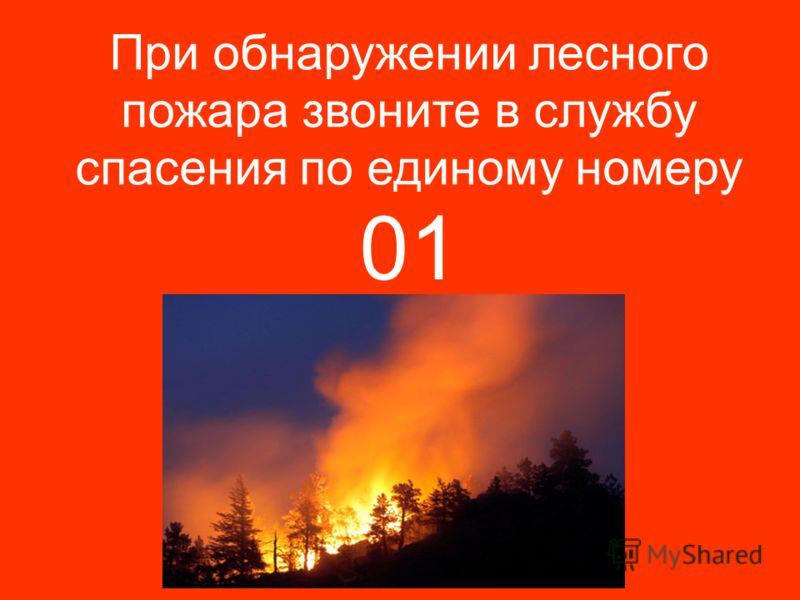 При обнаружении лесного пожара звоните в службу спасения по единому номеру 01
