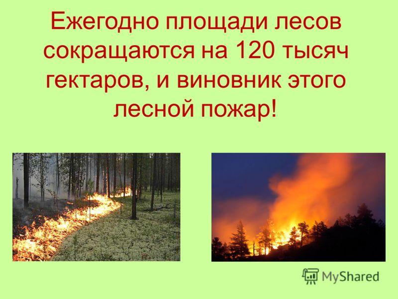 Ежегодно площади лесов сокращаются на 120 тысяч гектаров, и виновник этого лесной пожар!