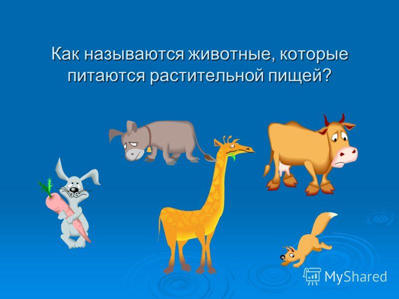 Как называются животные, которые питаются растительной пищей?