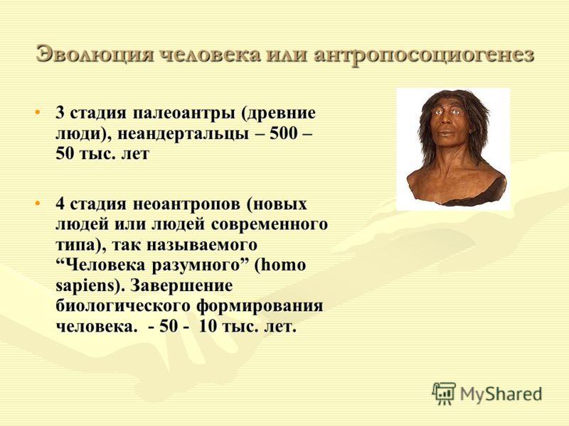 Эволюция человека или антропосоциогенез 3 стадия палеоантры (древние люди), неандертальцы – 500 – 50 тыс. лет3 стадия палеоантры (древние люди), неандертальцы – 500 – 50 тыс. лет 4 стадия неоантропов (новых людей или людей современного типа), так наз