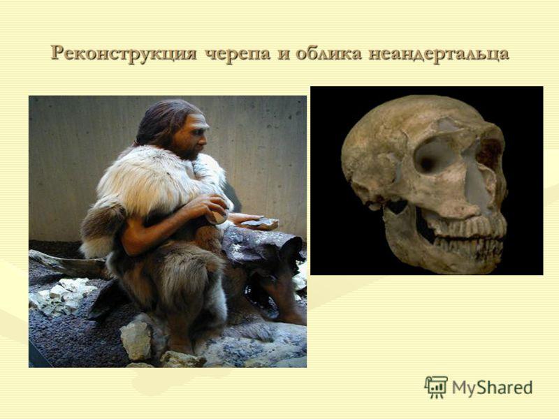 Реконструкция черепа и облика неандертальца