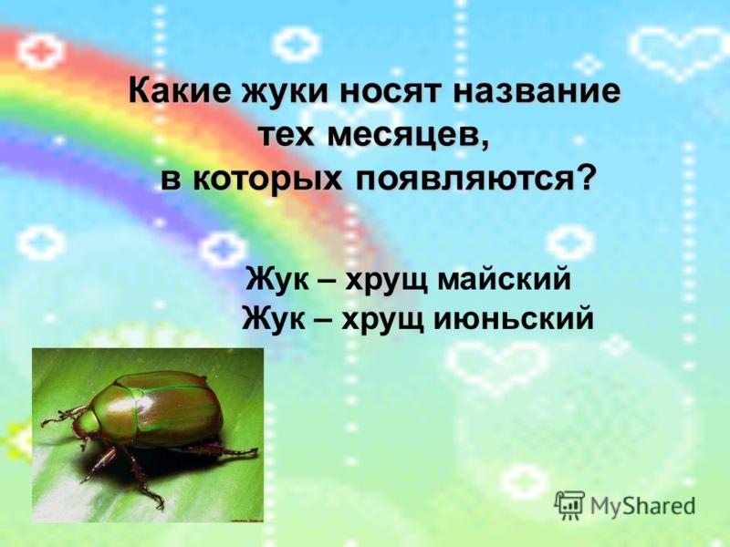 Какие жуки носят название тех месяцев, в которых появляются? Жук – хрущ майский Жук – хрущ июньский