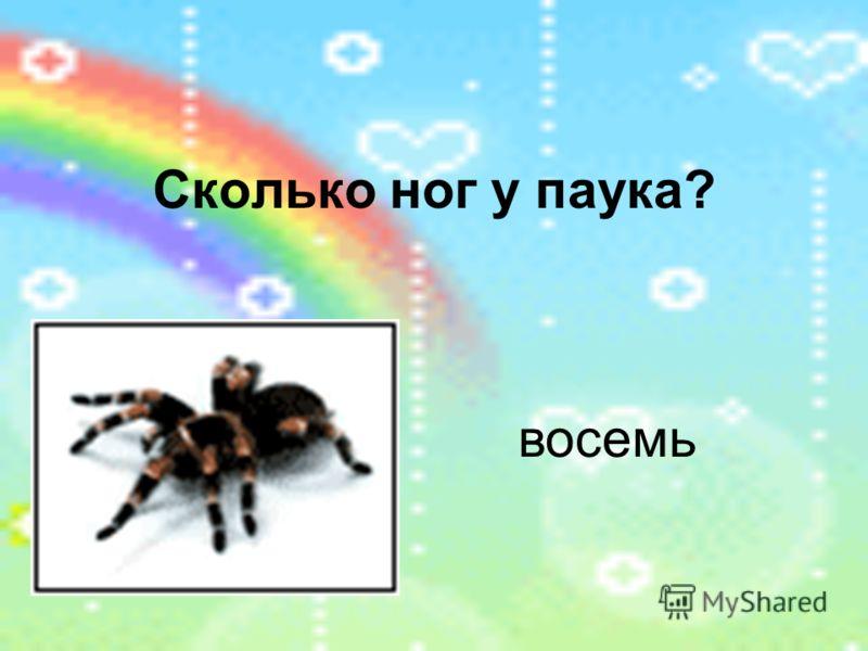 Сколько ног у паука? восемь