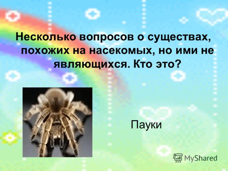Несколько вопросов о существах, похожих на насекомых, но ими не являющихся. Кто это? Пауки