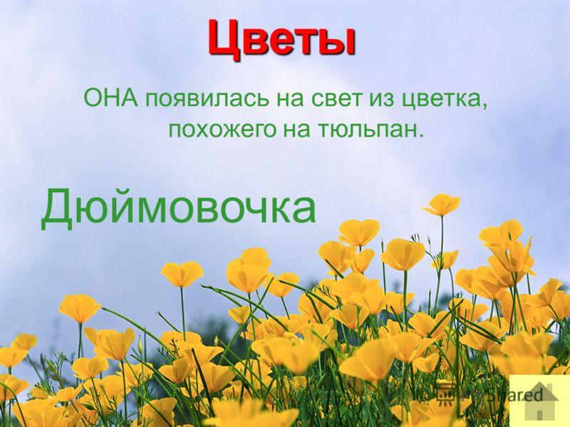 Цветы ОНА появилась на свет из цветка, похожего на тюльпан. Дюймовочка