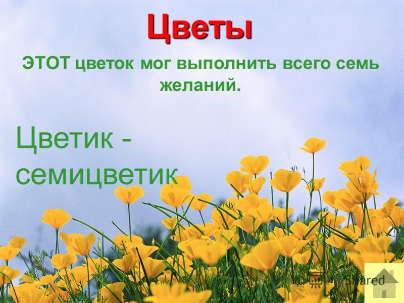 Цветы ЭТОТ цветок мог выполнить всего семь желаний. Цветик - семицветик