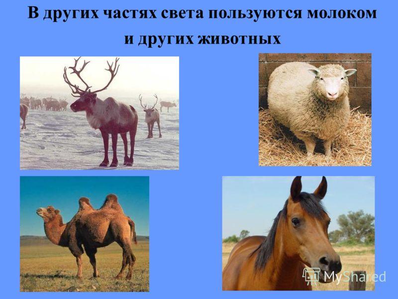В других частях света пользуются молоком и других животных